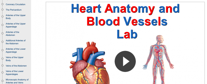 Introduction page of Madison Area Technical College's Heart Anatomy and Blood Vessels course in CourseArc